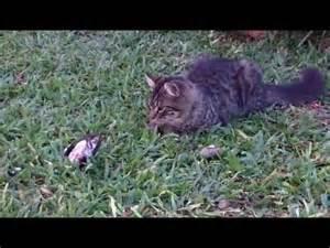 Video de Gato Gracioso Cachorro Jugando con Aves Pajaros ...