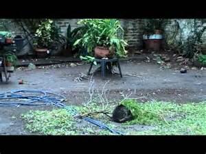 Video Gato Chistoso y Divertido con Pajaro Jugueton ...
