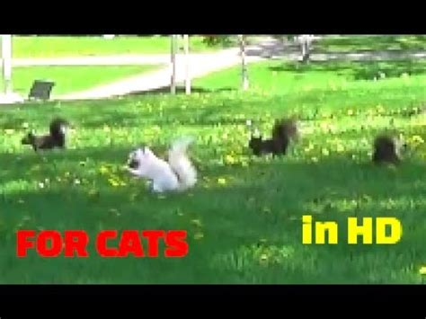 Vídeo para Gatos   pájaros, ardillas, conejos, ardillas ...