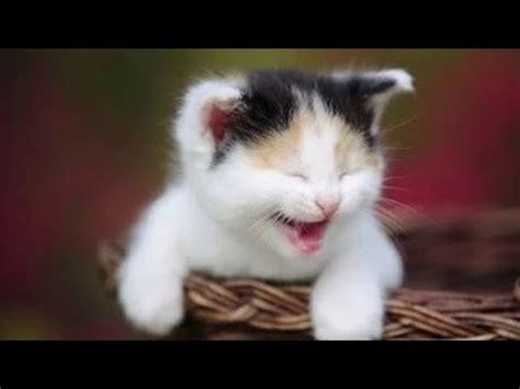 Videos de Risa de Gatos Chistosos   Videos Graciosos 2014 ...