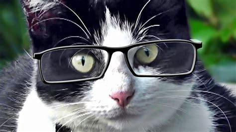 Videos Para Gatos : Gato Mirando Pájaros   YouTube