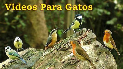 Videos Para Gatos : Pájaros Cantando en el Bosque   8 ...