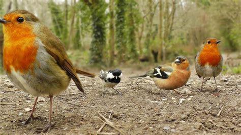 Videos y Película Para Gatos   Canto de Aves   YouTube