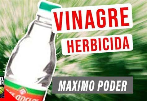 Vinagre el mejor herbicida natural   Usar vinagre para ...