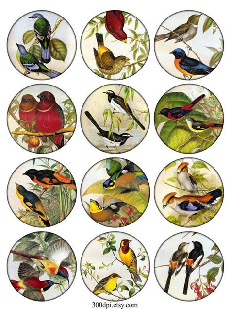 Vintage Printable Tags birds Digital Collage Sheet large