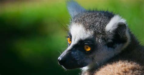 Visit Bioparc Fuengirola Spain | Thomas Cook