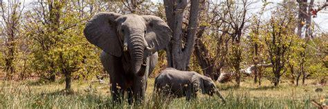 Visit Moremi Wildlife Reserve, Botswana | Audley Travel
