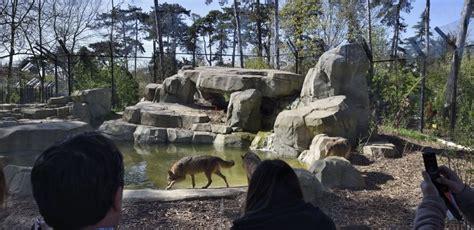 Visit the Zoological Park of Paris   Discover Walks Blog