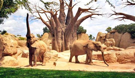 Visita al Bioparc de Valencia, el parque zoológico de la ...