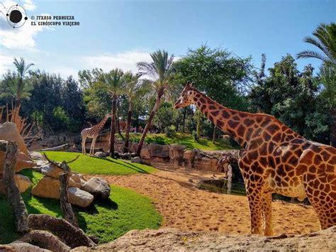 Visita al Bioparc de Valencia | Entradas y horarios ...