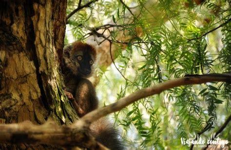 Visita al Bioparc de Valencia   Valencia, Animales, Parques