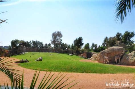 Visita al Bioparc de Valencia   Valencia, Fotografia, Parques