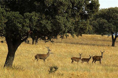 Visita Al Parque Nacional Los Cabañeros En Castilla La Mancha