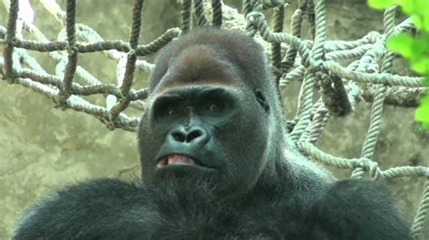 Visita al zoo de Barcelona  en video    YouTube