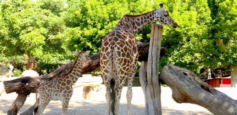Visita al Zoo: ruta paso a paso para no perderse nada ...