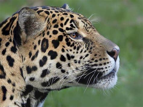 Visita Amazonas y deléitate con su envidiable flora y ...