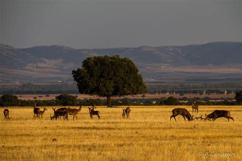 Visita el Parque Nacional de Cabañeros :: www ...