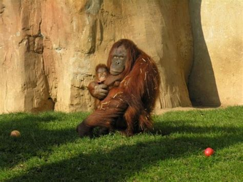 Visita el Zoológico de Fuengirola