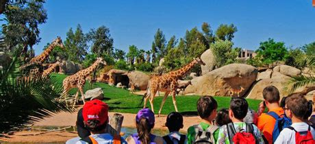Visita guiada escolar al Bioparc Valencia para niños