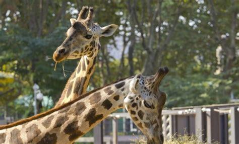 Visita lliure al Zoo de Barcelona | Apropa Cultura