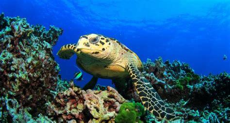 Visita Zoo Aquarium de Madrid   Actividades y Planes para ...