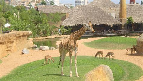 Visitar el zoo Bioparc en Valencia