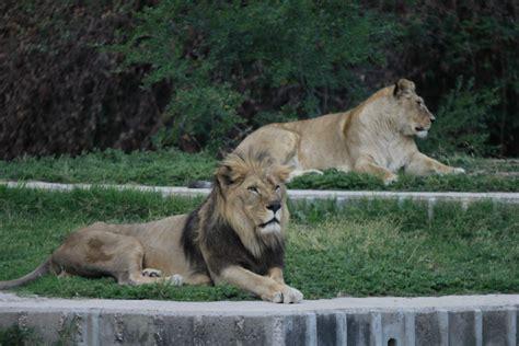 Visitar el Zoo de Madrid