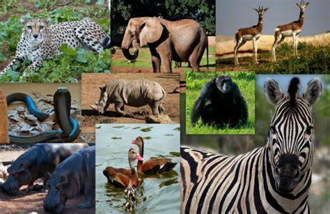 Visite du jardin zoologique de rabat   made in rabat