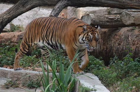 Visite du Zoo de Barcelone | Aide voyage. Bons plans et ...