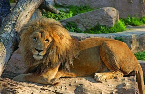 Visiter le zoo de Barcelone