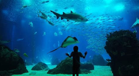 Visiter l'Oceanarium de Lisbonne, l'aquarium de la capitale