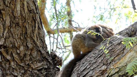 Vive la experiencia Bioparc y conoce a las nuevas crías ...