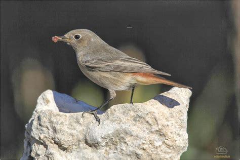 Vive, que no es poco.: Fotografiando aves comunes ...