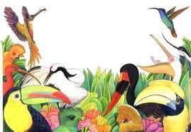 viveiro de cobras: Classe aves