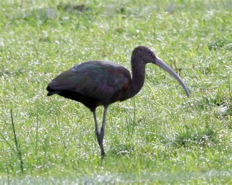 VIVENCIAS LLANERAS DEL ABUELO: Aves zancudas del Llano ...