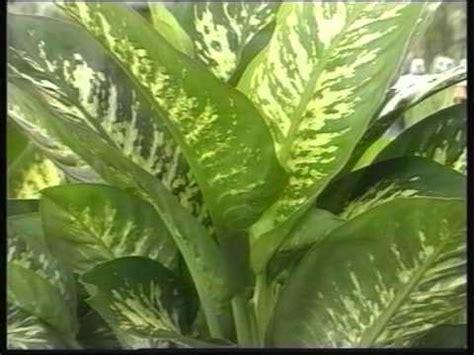 VIVERO DE PLANTAS ORNAMENTALES   YouTube