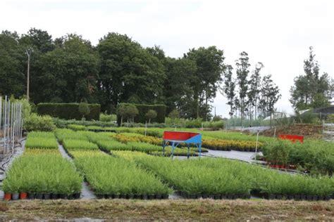 Vivero online en Galicia | Comprar plantas online | Viforsa