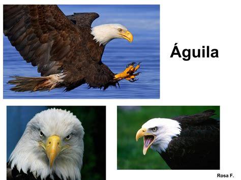 Vocabulario en imágenes. Maestra de Infantil y Primaria ...