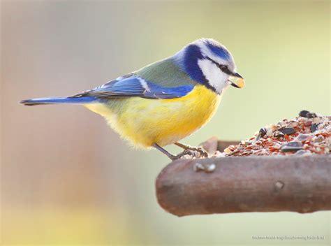 Vogels in de tuin voeren   Intratuin