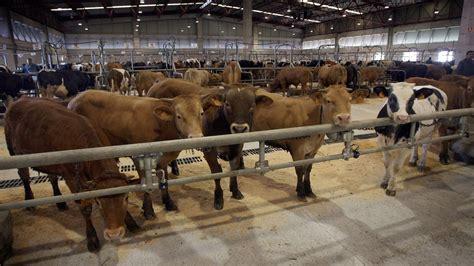 Vuelven las ferias de ganado a Galicia, con mascarilla y ...