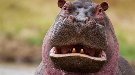 Wacky Weekend: Funny Animal Faces