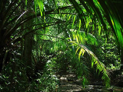 Walking through the jungle what do we see…… | First Steps ...