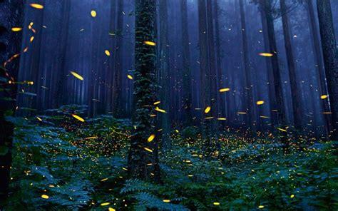 Wallpaper Forest, Fireflies, Trees, Night   WallpaperMaiden