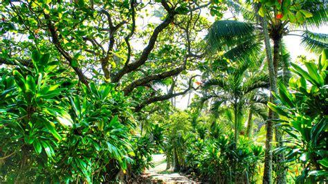 Wallpaper : waterfall, beach, branch, green, palm trees ...