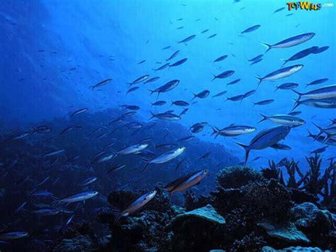 wallpaper,fondos de paisajes,caminos,fondo del mar
