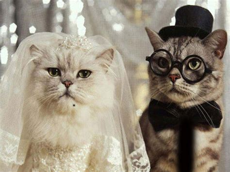 Wallpapers Download: Funny Cats Wallpapers Free Download