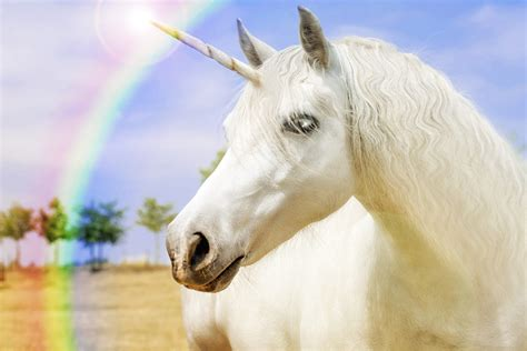 Watch a  unicorn horn  cyst get popped without screaming ...