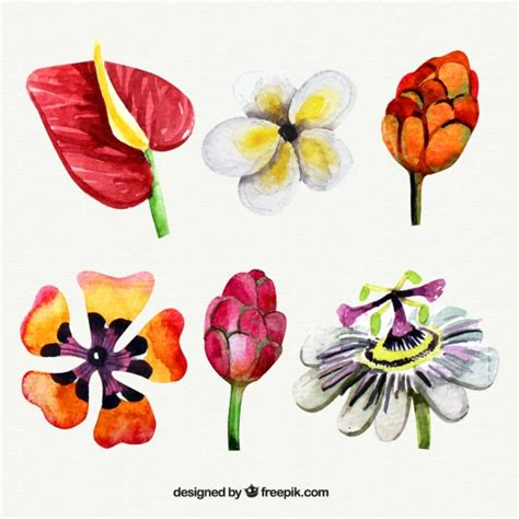 Watercolor kind of exotic flowers Vector | Free Download