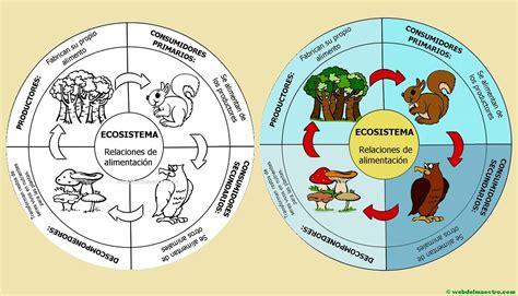 web del maestro — Ecosistema | Cadena alimenticia