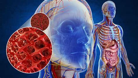WebQuest   El aparato circulatorio en el ser humano
